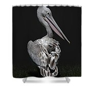 Pink-backed Pelican Rear View Shower Curtain