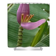 Pink Banana Flower Shower Curtain