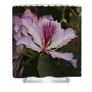 Pink Bauhinia Flower Shower Curtain