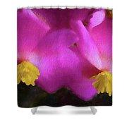 Pink Begonia In San Diego Shower Curtain
