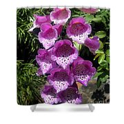 Pink Bell Flowers, Close-up. Foxglove 02 Shower Curtain