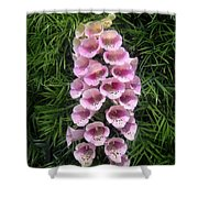 Pink Bell Flowers. Foxglove 01 Shower Curtain