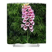 Pink Bell Flowers. Foxglove 02 Shower Curtain