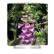 Pink Bell Flowers. Foxglove 03 Shower Curtain