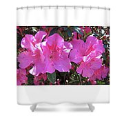 Pink Bevy Of Beauties Shower Curtain