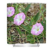 Pink Bindweed Shower Curtain