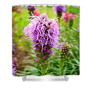 Purple Blazing Star 01 Shower Curtain