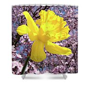 Pink Blossom Spring Trees Yellow Daffodil Flower Baslee Troutman Shower Curtain