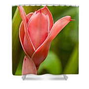 Pink Blossoming Flower Shower Curtain