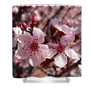 Pink Blossoms 033014c Shower Curtain
