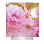 Pink Blossoms Art Prints Canvas Spring Tree Blossoms Baslee Troutman Shower Curtain