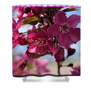 Pink Blossoms Shower Curtain
