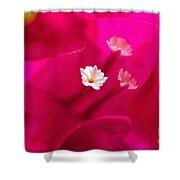Pink Bougainvillaea Shower Curtain