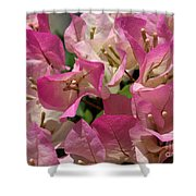 Pink Bougainvillea Shower Curtain