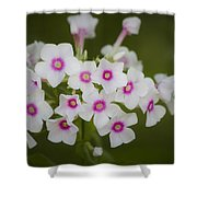 Pink Bright Eyes Garden Phlox Shower Curtain