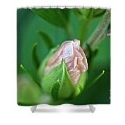 Pink Bud Shower Curtain