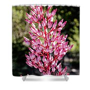 Bromeliads Flowers Shower Curtain