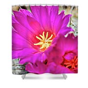 Pink Cacti Flowers Shower Curtain