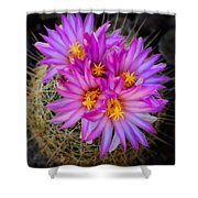 Pink Cactus Flowers Square  Shower Curtain