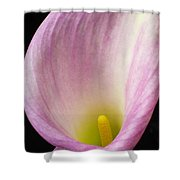 Pink Calla Lily Close Up Shower Curtain