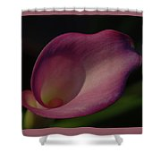 Pink Calla Lily - Horizontal Shower Curtain
