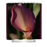 Pink Calla Lily - Vertical Shower Curtain