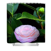 Pink Camelia Shower Curtain