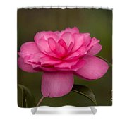 Pink Camellia 3 Shower Curtain
