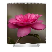 Pink Camellia 4 Shower Curtain