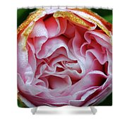 Pink Camellia Bud Shower Curtain