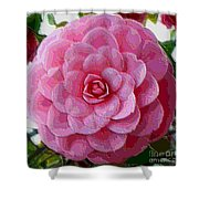 Pink Camellia Dream  Shower Curtain