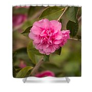 Pink Camellia 2 Shower Curtain