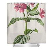 Pink Campion Shower Curtain