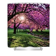 Pink Canopy Shower Curtain