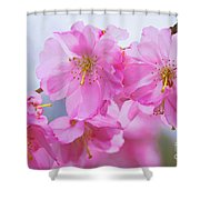 Pink Cherry Blossom Cluster Shower Curtain