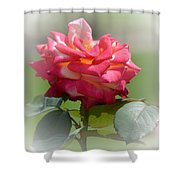 Pink Chiffon Ruffles Shower Curtain