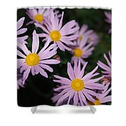 Pink Clara Curtis Daisy Chrysanthemum Shower Curtain