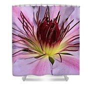Pink Clematis Closeup Shower Curtain