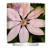 Pink Clematis  Shower Curtain