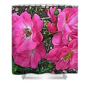 Pink Climbing Roses - Digitally Enhanced Shower Curtain