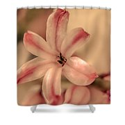 Pink - Close Up Shower Curtain