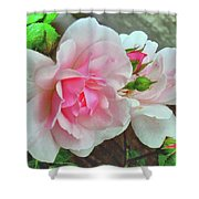 Pink Cluster Of Roses Shower Curtain