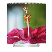 Pink Colored Hibiscus Closeup Image Shower Curtain