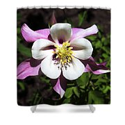 Pink Columbine Shower Curtain