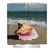 Pink Conch  Shower Curtain