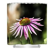 Pink Coneflower Shower Curtain