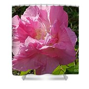 Pink Confederate Rose Shower Curtain