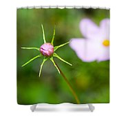 Pink Cosmos Bud Shower Curtain