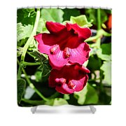 Pink Creeping Gloxinia Shower Curtain