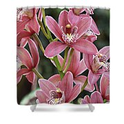 Pink Cymbidium Orchid #3 Shower Curtain